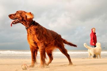 Hund-Niederlande