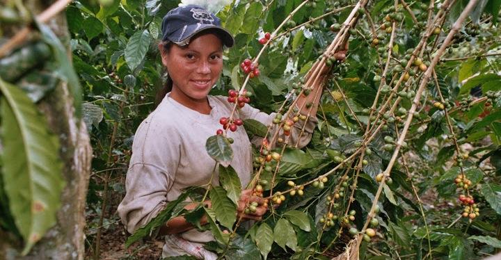 Kaffee_Nicaragua_2004_Cecocafen_Cesar Correa (9)