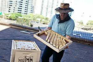 SLSN Rooftop Beehives