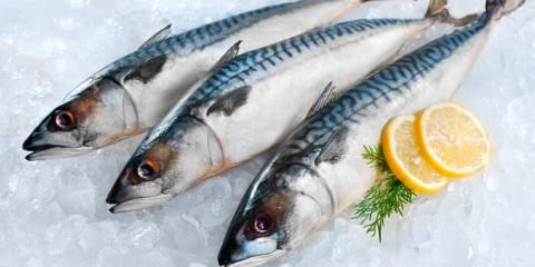 warum-bekommt-frischfisch-keinen-gefrierbrand