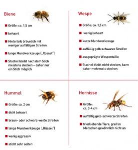 Insektenarten_klein_© ALK-Abelló