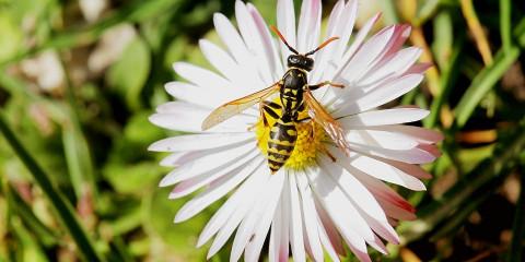 blossom-1897846_960_720