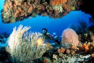Maldives Diving 3