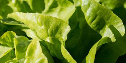 salad-1710328__340