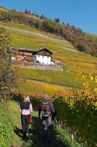 Roter-Hahn_Herbst-1