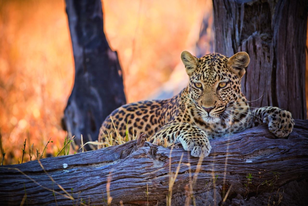 Belmond Safaris, Botswana © Belmond (2)