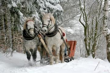 Pferdeschlitten_(c)Pixabay