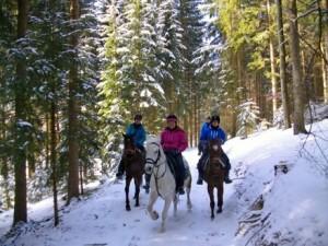 2017-01-25 Winterreiten_(c)Reitpark-Gstoettner