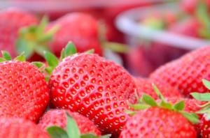 4159-kvarner-selce-erdbeerfest