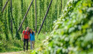 2017-07-21_Wanderung-durchs-Hopfenfeld_(C)Tourismusverband-Mühlviertler-Kernland_Hochhauser