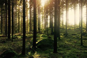 Wald2Aussendung