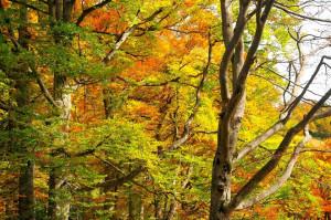 Buchenwald im Nationalpark Hohe Tauern