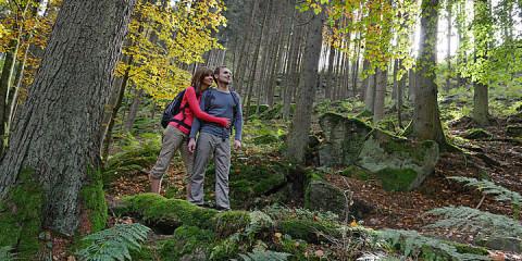 csm_2017-08-31_Wandern-im-Muehlviertel__c_Oberoesterreich-Tourismus_Roebl_741ff33ee8
