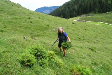 Schwenden Mordaualm c Biosphaerenregion Berchtesgadener Land