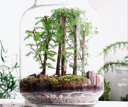 Berühmt DIE grüne Idee: der Flaschengarten!   Wellness Magazin – The way @JR_46